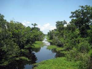 Kenta_Canal_Barataria_Preserve
