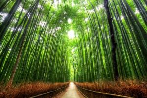 Bosque de Bambu-Kioto