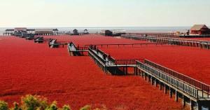 Playa roja-China