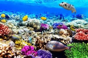 Arrecifes Coralinos del Mar Rojo